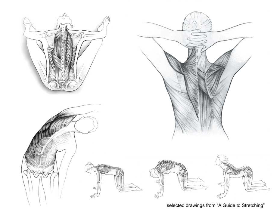 tillman studios anatomical drawings